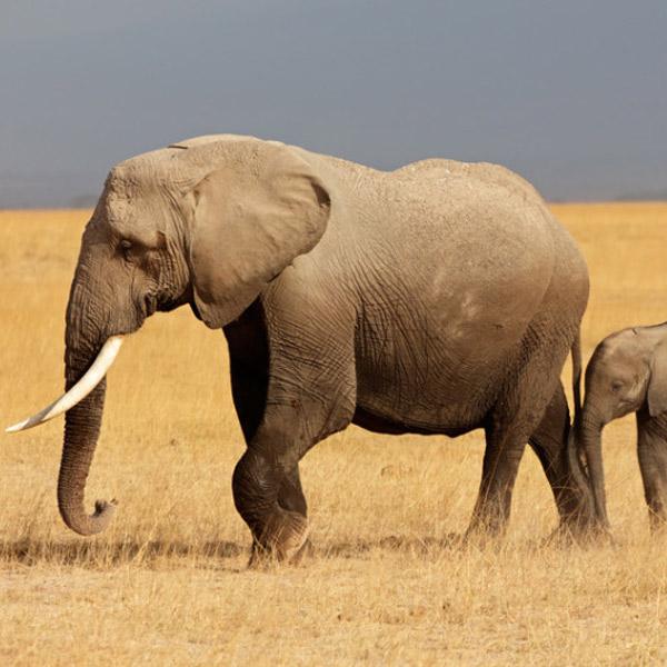 фауна,дефаунизация,вымирание,катастрофа, Биологи говорят о начале шестого массового вымирания на Земле