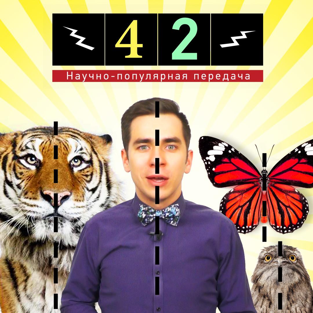 наука,биология,симметрия,эволюция,животные, Почему животные симметричны?