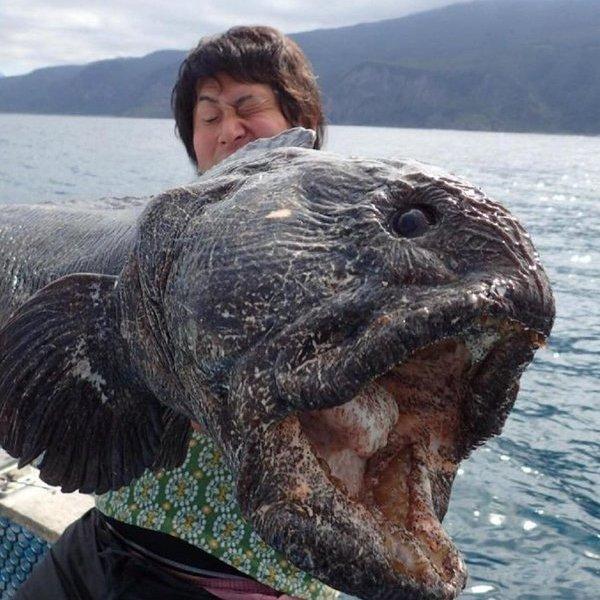 Океан, климат, наводнение, цунами, вода, биология, природа, животные, фауна, эволюция, здоровье, Близ берегов Фукусимы поймали «чудовище»