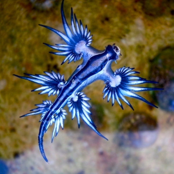 Исследование, природа, биология, эволюция, животные, фауна, океан, море, вода, Для защиты от хищников морские моллюски питаются токсинами
