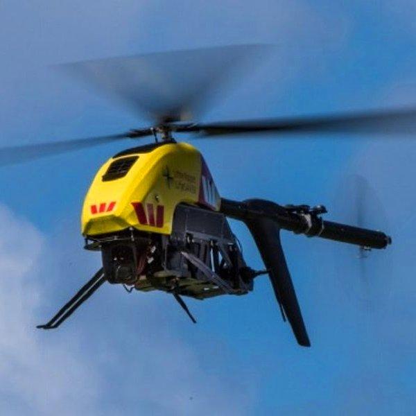 авиация,дрон,флора,фауна,океан, «Мертвецам здесь не место»: в Австралии вертолеты-беспилотники будут следить за приближением акул