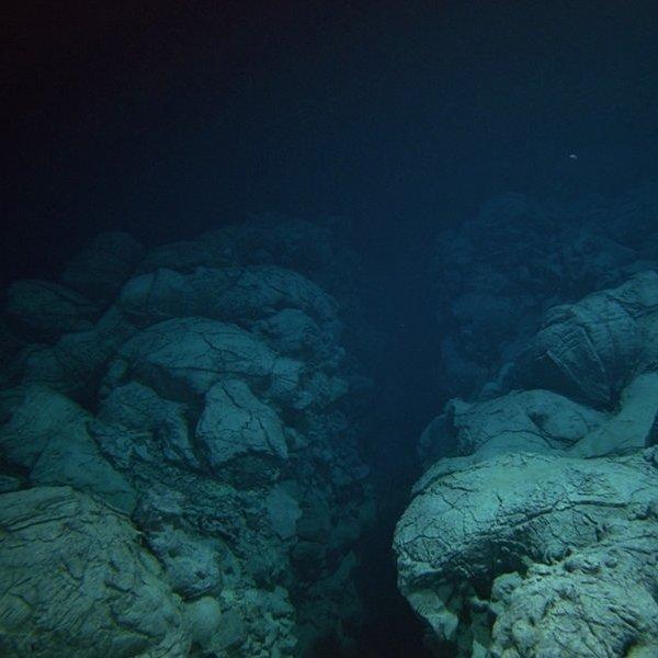 океан, природа, На дне океана увидели рыбу-монстра